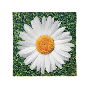"Serviettes ""Marguerite"" (lot de 20)"